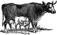 cow and calf engraving