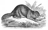 beaver with log engraving