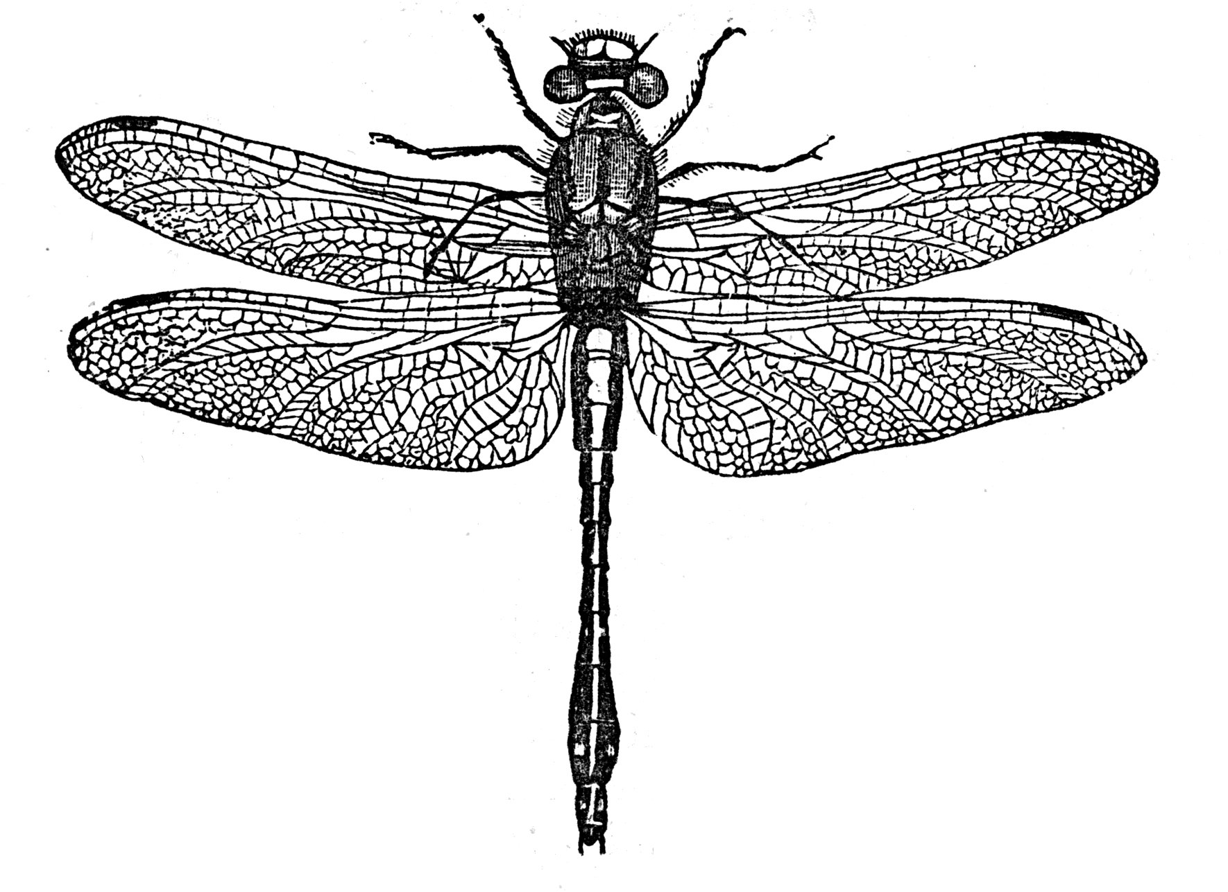 insect essay Insects essays: over 180,000 insects essays, insects term papers, insects research paper, book reports 184 990 essays, term and research papers available for.