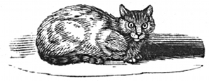 cat engraving