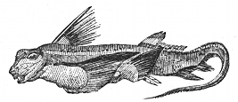 chimaera engraving