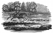 foxhunt engraving