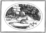 hares and frogs engraving