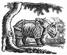 rhinocerus engraving