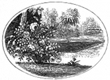rose garden engraving