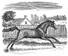 running horse engraving