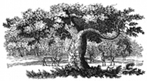 sherwood forest engraving