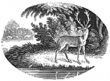 stag engraving