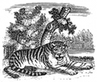 tiger engraving