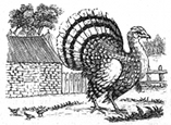 turkey engraving