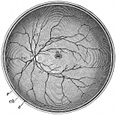 anatomy, eyeball engraving