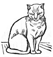 sitting cat engraving