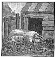 barn, pigs engraving
