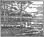 wetlands engraving