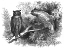 owl and parrot engraving